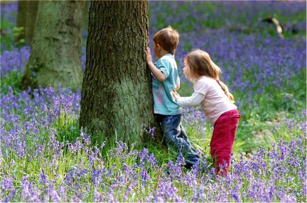 children-in-bluebell-wood2